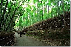 Дорога серед бамбуків