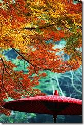 Осінь в Токіо