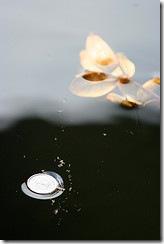 Floating en coins