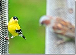 Пташки грають у хованки - Мушля самітниці - Приховуємо та показуємо