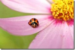 mushlia.com - Жучки-павучки