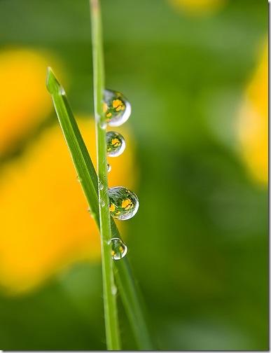 Краплі роси на траві