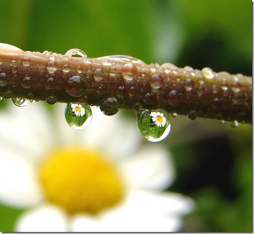 Краплини роси