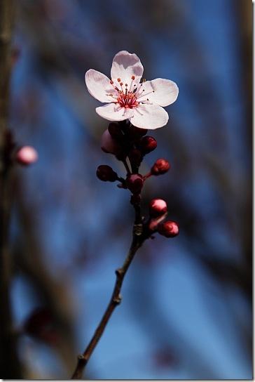 Весняна квітка на дереві