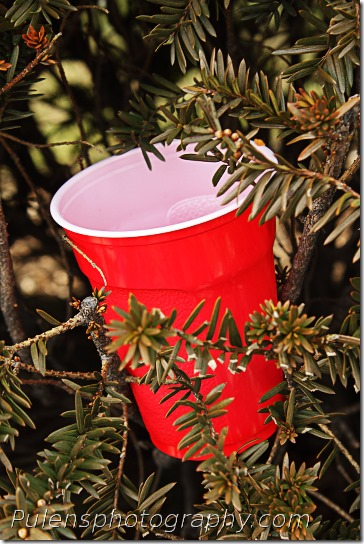 Cola cup in a bush 1
