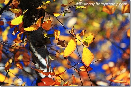 Foliage 7