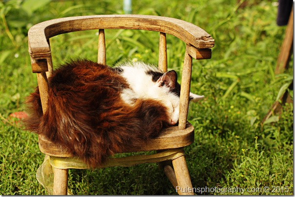 Cat Sleeping on the Chair