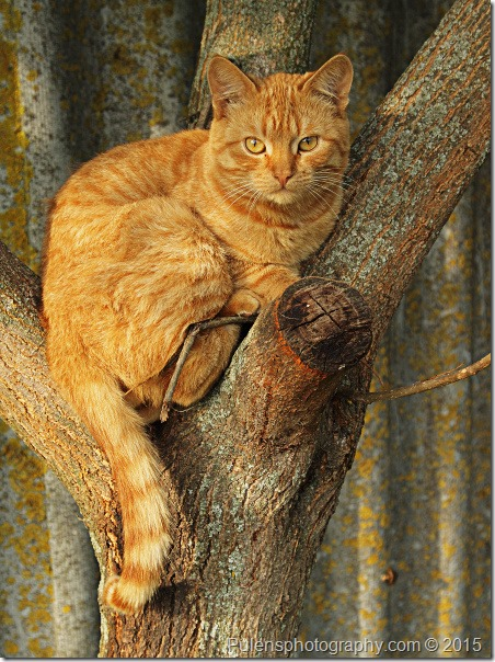 Red cat on tree